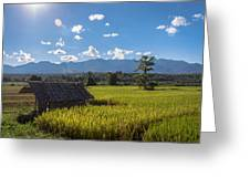 Rice Fields Of Thailand Greeting Card