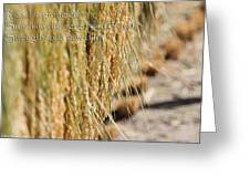 Rice Harvest - Haiku Greeting Card