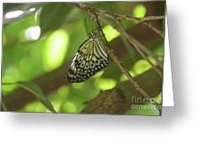 Rice Paper Butterfly Clinging To A Tree Branch Greeting Card