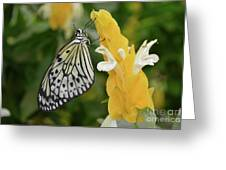 Rice Paper Butterfly Greeting Card