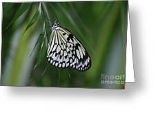 Rice Paper Butterfly Sitting On Green Foliage Greeting Card