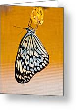 Rice Paper Out From Chrysalis Greeting Card