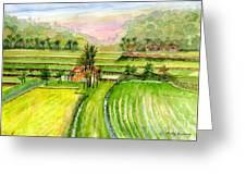 Ricefield Panorama Greeting Card