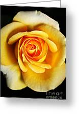 Rich And Dreamy Yellow Rose   Greeting Card