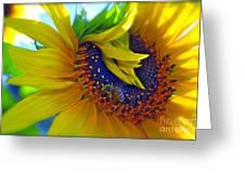 Rich In Pollen Greeting Card