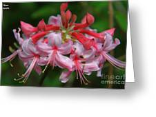 Rich Pink Blossoms Greeting Card