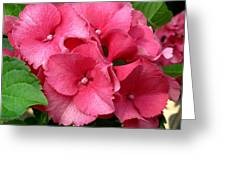 Rich Pink Greeting Card