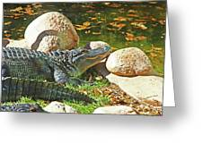 Richly Hued Colorado Gator On The Rocks 2 10282017 Greeting Card