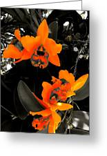 Richness In Sunshine Greeting Card