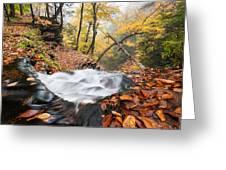 Ricketts Glen State Park Ganoga Falls Allegheny Mountains Pennsylvania Greeting Card