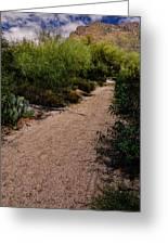 Ridge Trail No2 Greeting Card