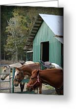 Riding Horses Greeting Card