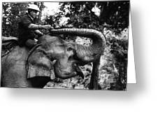 Riding The Elephant Greeting Card
