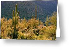 Rimlit Saguaro Forest Greeting Card