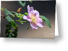 Rimrock Rose Greeting Card