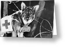 Rin-tin-tin (1916-1932) Greeting Card