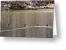 Ring-necked Duck Formation Greeting Card