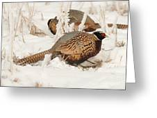 Ring-necked Pheasant Hunting In The Snow Greeting Card