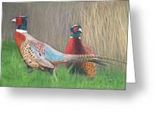 Ring-necked Pheasants Greeting Card
