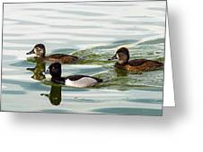 Ring-necked Trio Greeting Card