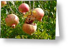 Ripe Pomegranates Greeting Card