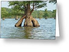 Ripley Tennessee Cypress Greeting Card