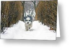 Ripley's Run Greeting Card