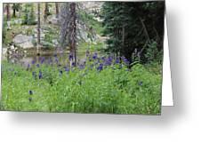 Ripples Behind Wildflowers Greeting Card