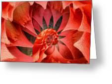 Rising  Greeting Card