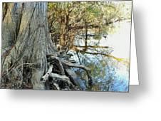 River Art Greeting Card