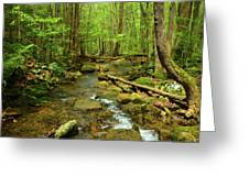 River Crossing On The Maryland Appalachian Trail Greeting Card