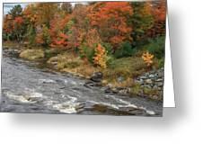 River Foliage Greeting Card