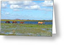 River Horses Horizon Greeting Card