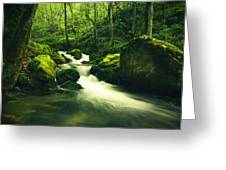 River In A Green Forest Greeting Card