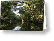River In The Jungle. Greeting Card