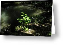 River In The Woods Greeting Card
