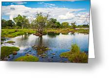 River Oasis Greeting Card