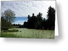 River Of Algae And Stippled Clouds Greeting Card