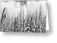 River Of Grass Greeting Card