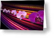 River Of Orchids Greeting Card
