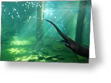 River Otter Swim Greeting Card