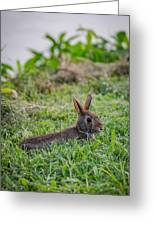 River Rabbit Greeting Card