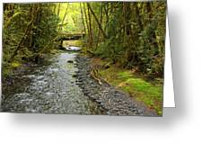 River Through The Rainforest Greeting Card
