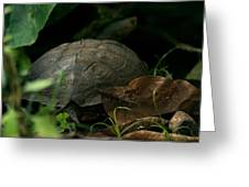 River Turtle 2 Greeting Card