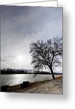 Riverwalk Tree Greeting Card