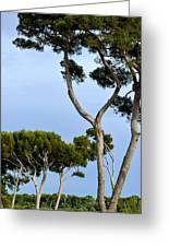 Riviera Trees Greeting Card