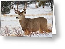 Rmnp Mule Deer 2 Greeting Card