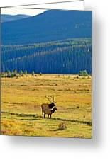 Rmnp Plains In Autumn Greeting Card