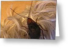 Roach Hair Clip Greeting Card