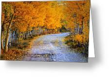 Road Between Trees Greeting Card